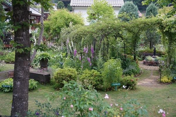 夕方のノラの庭_e0365880_21210970.jpg