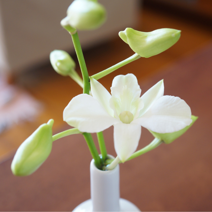花、癒し。_d0343297_15465043.jpg