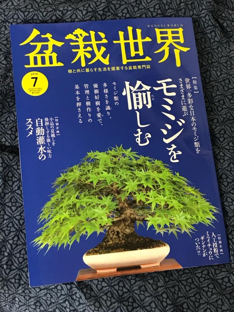 盆栽世界7月号_f0170915_11151549.jpg