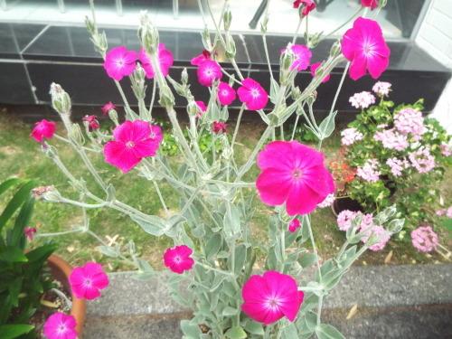 女将はお花好き、観葉植物も好き。_b0184336_18170135.jpg