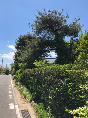 樹木診断と芽摘み_c0112447_07544687.jpg