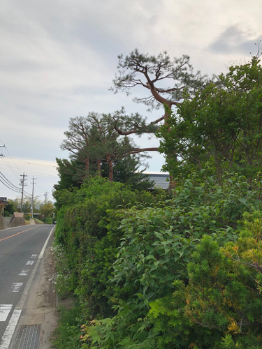 樹木診断と芽摘み_c0112447_07545359.jpg