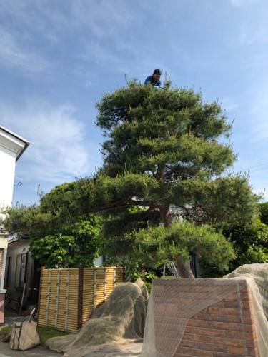 樹木診断と芽摘み_c0112447_07550560.jpg