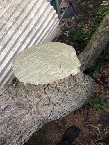 樹木診断と芽摘み_c0112447_07552497.jpg