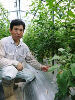 樹上完熟の朝採りトマト 令和元年の予約販売受付スタート!初回出荷は6月11日(火)です!_a0254656_17112958.jpg