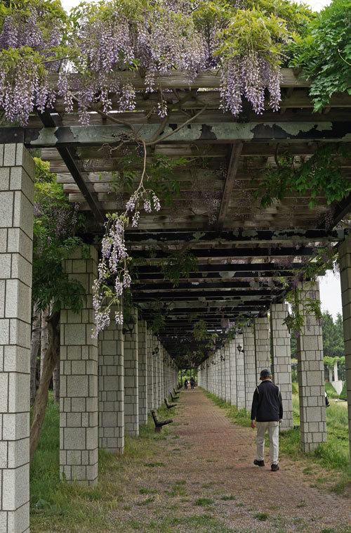 前田森林公園_d0162994_05275790.jpg