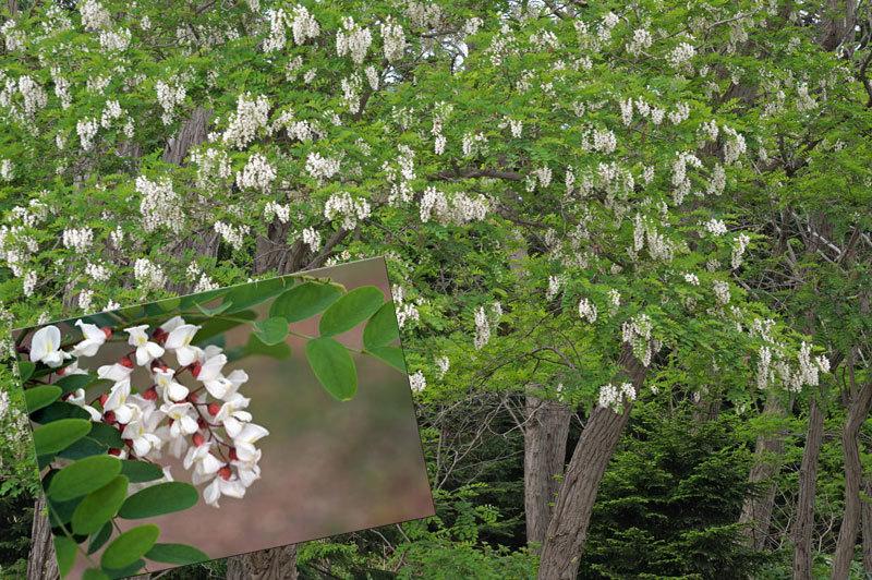 前田森林公園_d0162994_05290293.jpg