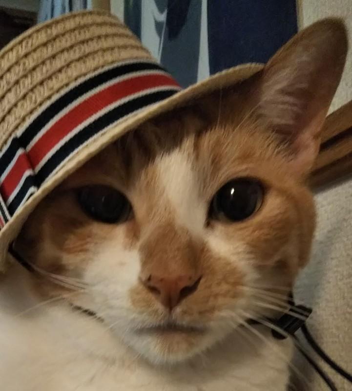 猫の仕事_a0333195_23150849.jpg
