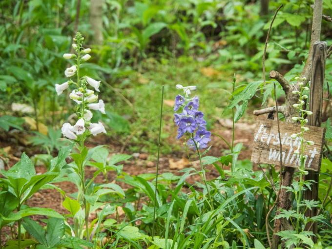 ひさびさの雨に濡れるカンタベリー・ガーデンの草花。_f0276498_23032518.jpg