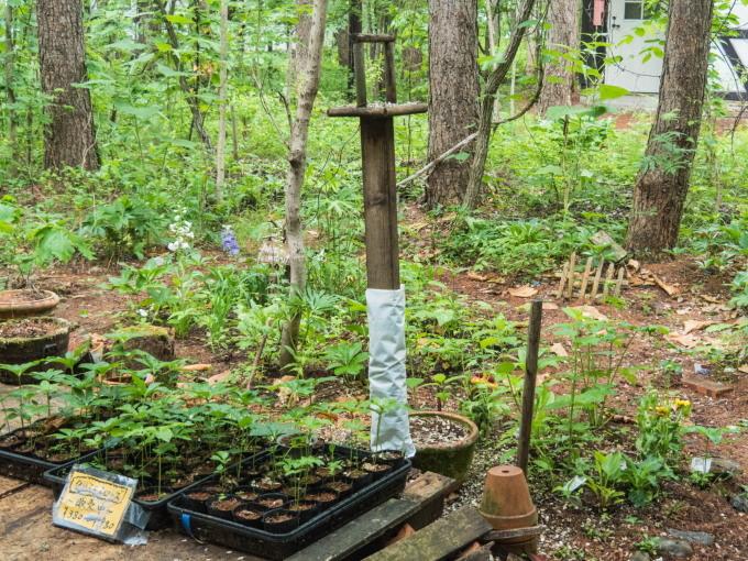 ひさびさの雨に濡れるカンタベリー・ガーデンの草花。_f0276498_23053488.jpg