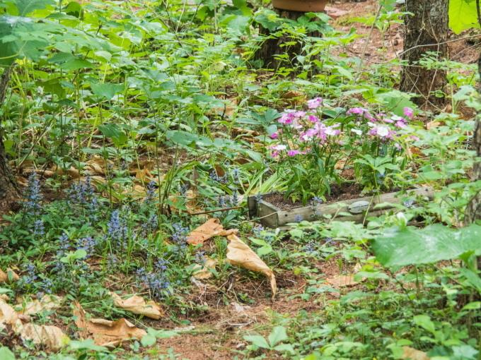 ひさびさの雨に濡れるカンタベリー・ガーデンの草花。_f0276498_23073377.jpg