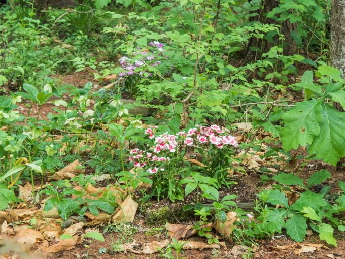 ひさびさの雨に濡れるカンタベリー・ガーデンの草花。_f0276498_23084661.jpg