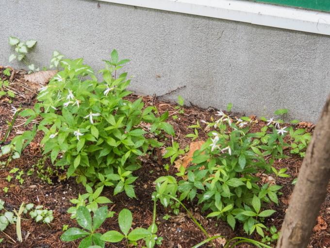 ひさびさの雨に濡れるカンタベリー・ガーデンの草花。_f0276498_23094435.jpg