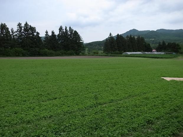 大高酵素 北海道工場見学_f0197703_15500666.jpg