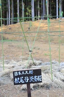 赤鳥居の展望台に宇宙神代桜が~_a0188405_23042142.jpg