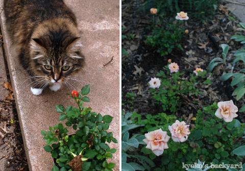 裏庭と花壇の様子(5月~6月上旬)その1_b0253205_03334952.jpg
