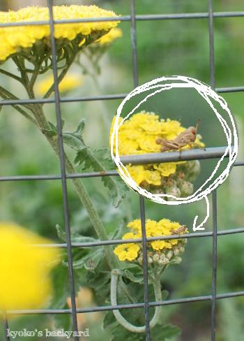 裏庭と花壇の様子(5月~6月上旬)その1_b0253205_03342326.jpg