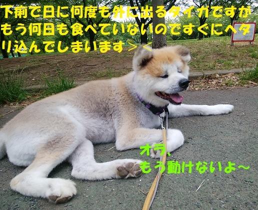 f0121712_15532723.jpg