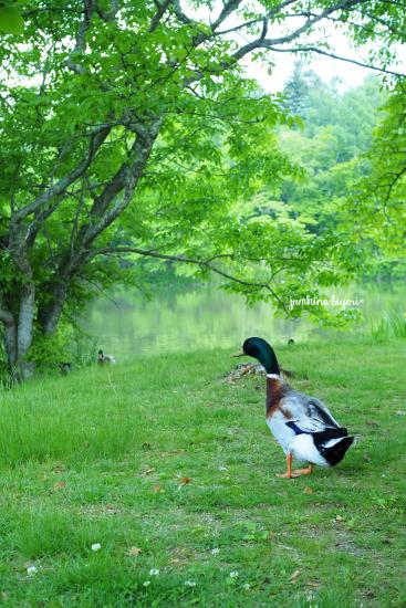 静かな湖畔で_e0268051_23323007.jpg