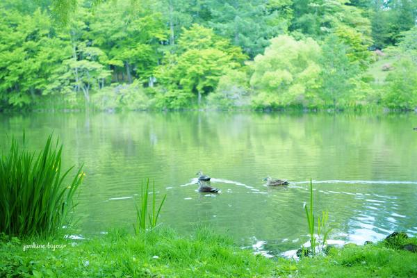 静かな湖畔で_e0268051_23333110.jpg