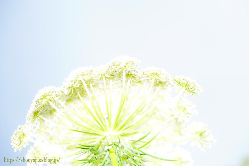 夏化粧・・・_a0333661_12352413.jpg