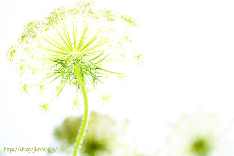 夏化粧・・・_a0333661_12353542.jpg