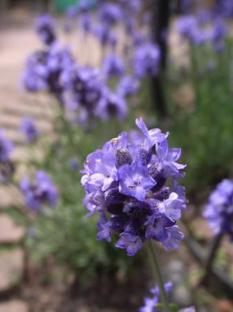 2019年デコルガーデン(Decor Garden)の花たち。_c0141989_01531696.jpg