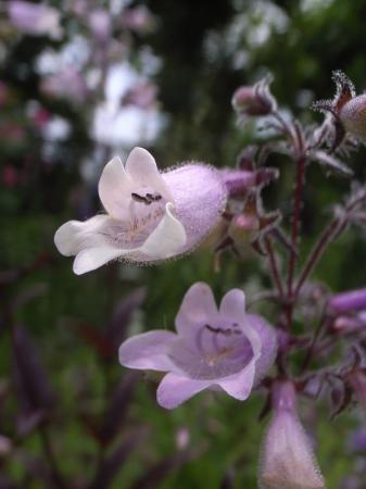 2019年デコルガーデン(Decor Garden)の花たち。_c0141989_02003873.jpg