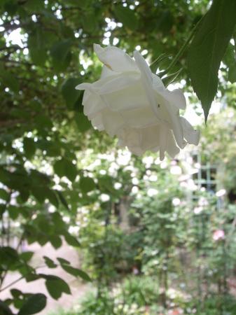 2019年デコルガーデン(Decor Garden)の花たち。_c0141989_02034047.jpg