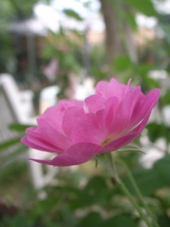 2019年デコルガーデン(Decor Garden)の花たち。_c0141989_02064473.jpg