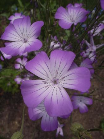 2019年デコルガーデン(Decor Garden)の花たち。_c0141989_02241249.jpg