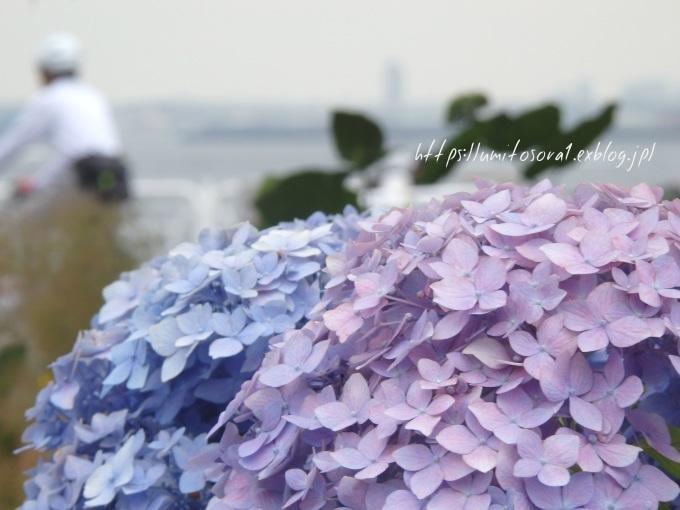 紫陽花の季節に_b0324291_22420076.jpg