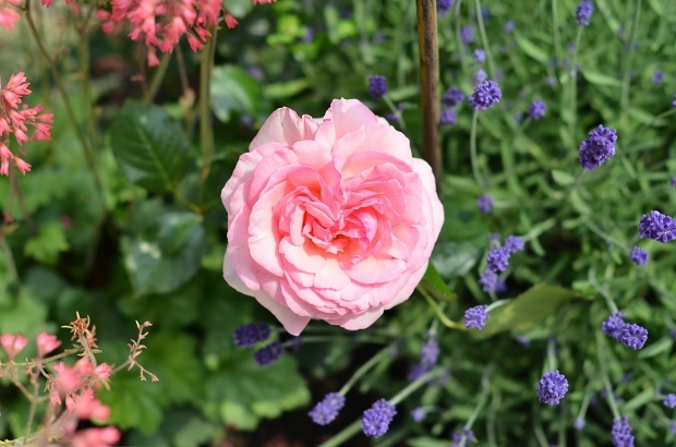 薔薇の庭 つづき_d0025294_16103575.jpg