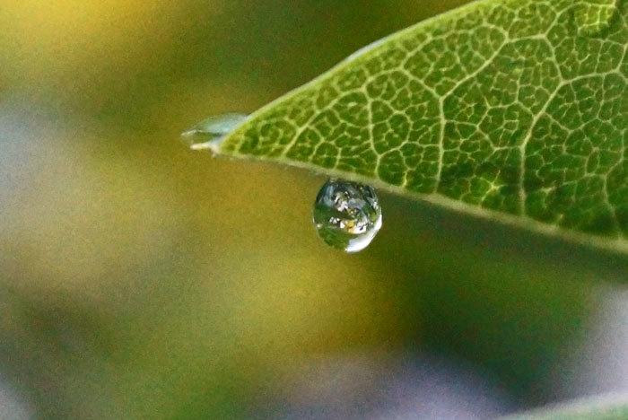 水滴_d0162994_05400671.jpg