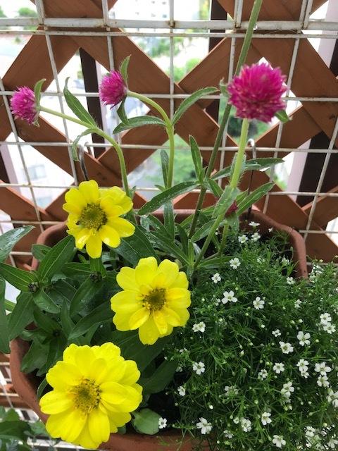ベランダの花_f0204295_16393350.jpg
