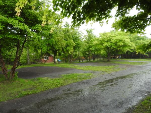 今週末の天気と気温(2019年6月7日):雨模様…肌寒さに注意_b0174425_10070569.jpg
