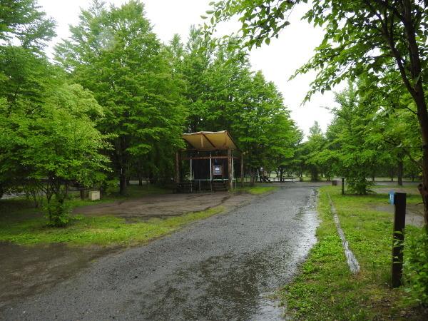 今週末の天気と気温(2019年6月7日):雨模様…肌寒さに注意_b0174425_10075734.jpg
