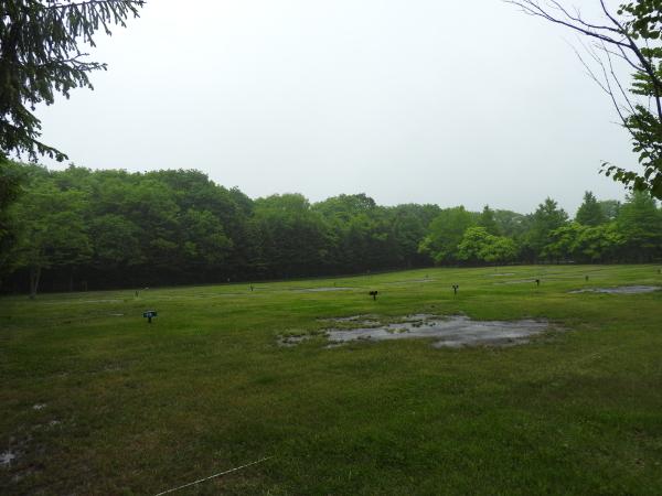 今週末の天気と気温(2019年6月7日):雨模様…肌寒さに注意_b0174425_10152776.jpg
