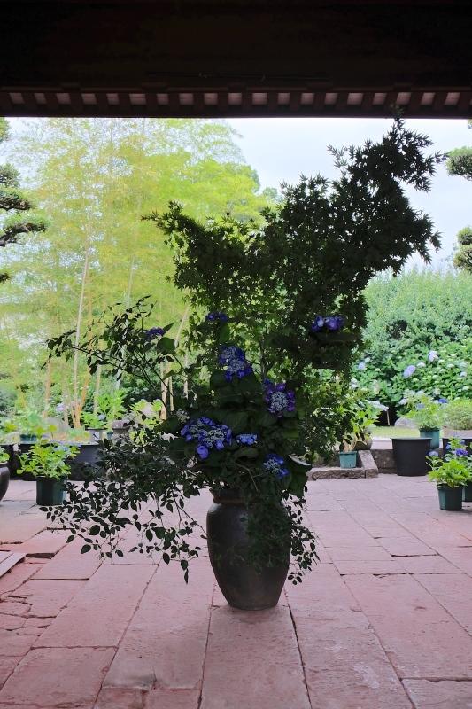紫陽花季 つづき_f0315034_12432532.jpg