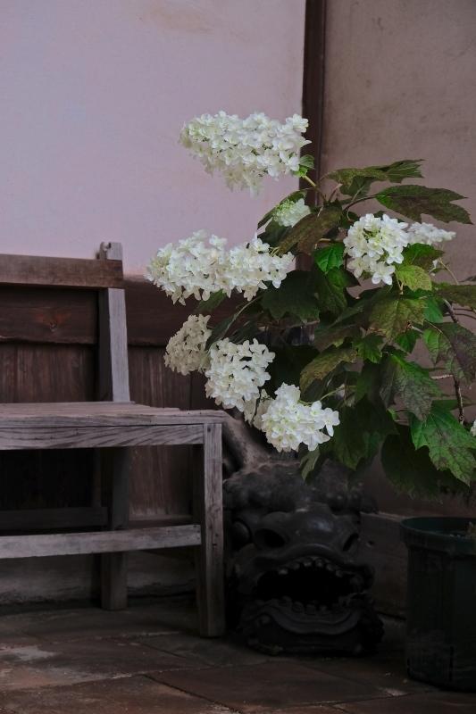 紫陽花季 つづき_f0315034_12453390.jpg