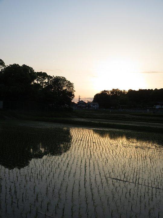 2019年6月16日 素敵な夕暮れどき  !(^^)!_b0341140_9471917.jpg