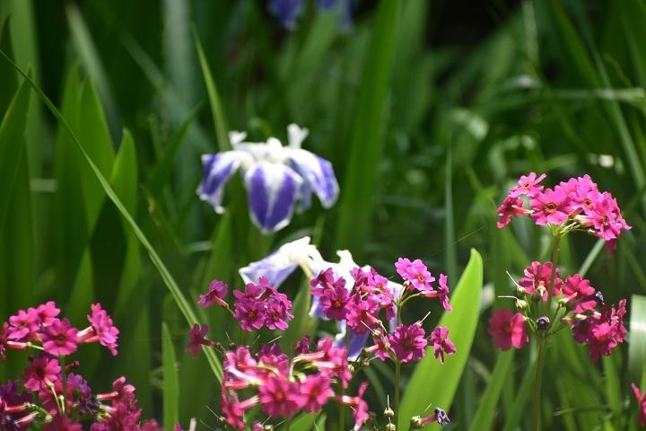 北大植物園の花たちです。_f0362073_14314020.jpg