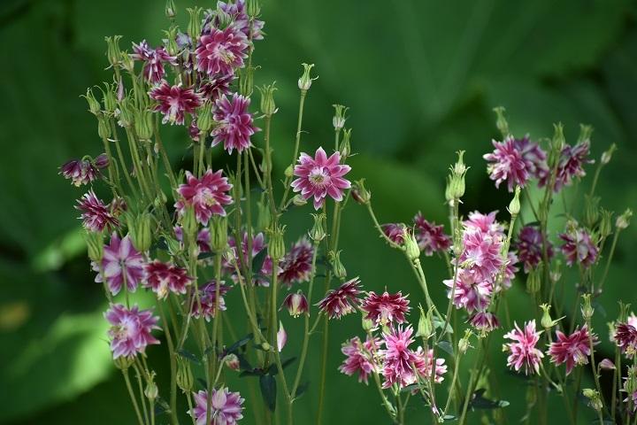北大植物園の花たちです。_f0362073_14315253.jpg