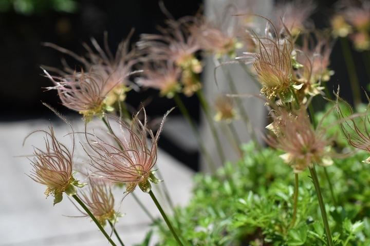 北大植物園の花たちです。_f0362073_14323387.jpg