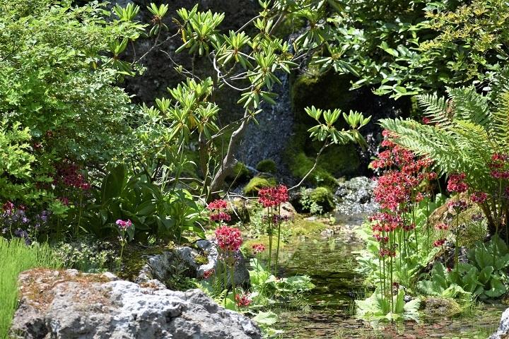 北大植物園の花たちです。_f0362073_14324863.jpg