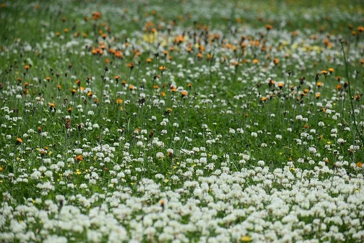 北大植物園の花たちです。_f0362073_14330437.jpg