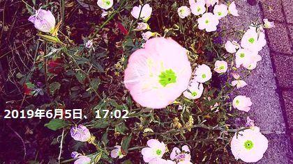 d0051601_02395964.jpg