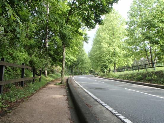 朝散歩コースの花たち_f0064906_12160072.jpg