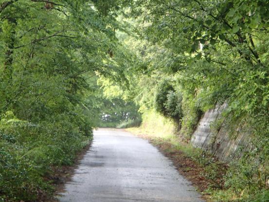 朝散歩コースの花たち_f0064906_12160578.jpg