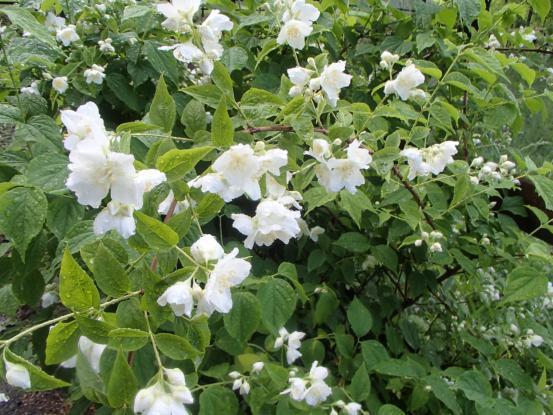 朝散歩コースの花たち_f0064906_12161746.jpg